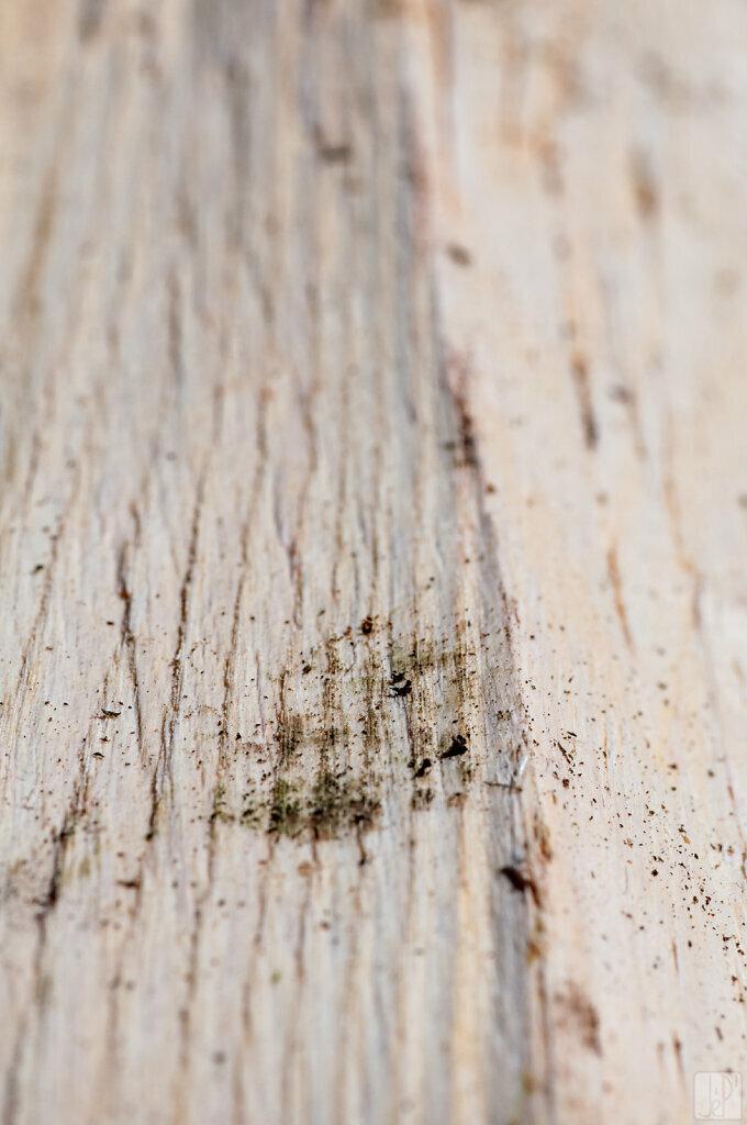Miettes sur bois blanc